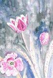 Tulips da mola ilustração royalty free