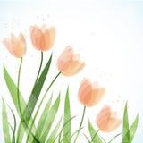 Tulips da mola, fundo floral ilustração do vetor