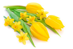 Tulips and daffodils Stock Image