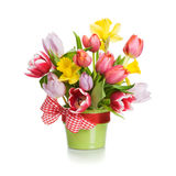 Tulips and Daffodils Royalty Free Stock Images