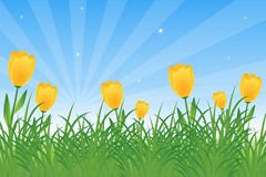 Tulips and dandelions royalty free stock photo
