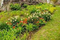 Tulips and dandelions Stock Photo