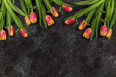 Tulips on darken concrete background Royalty Free Stock Photography