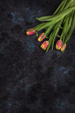 Tulips on darken concrete background. For Mother`s Day, spring time or Easter theme Royalty Free Stock Image