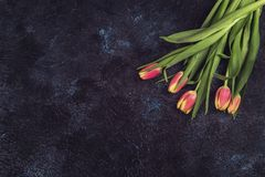 Tulips on darken concrete background. For Mother`s Day, spring time or Easter theme Royalty Free Stock Photo
