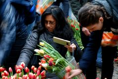 Tulips Day Amsterdam Stock Photo