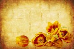 Tulips de Grunge imagens de stock