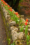 Tulips decorating a wall Stock Photo
