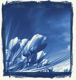 Tulips in delft's Blue Royalty Free Stock Image