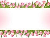 Tulips design template or background. EPS 10. Vector file included Royalty Free Stock Image