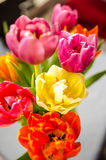 Tulips detail Royalty Free Stock Photos