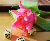 Tulips and dice. Red tulip making contrast with the green of the leaves, next to dices, expressing the chances or luck of humans in opposition to the everlasting Stock Photography