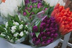 Tulips diferentes Fotos de Stock