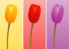 Tulips of Different Colors. 