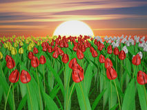 Tulips. Of different colors on the background of the rising sun Stock Images
