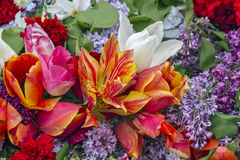 Tulips of different colors. Stock Photography