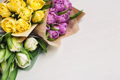 tulips of different colours on white background royalty free stock photography