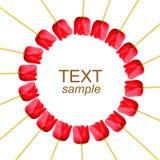 Tulips do círculo no branco com texto da amostra Foto de Stock Royalty Free
