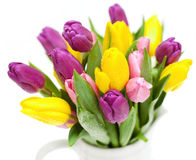 Tulips with droplets Stock Photo