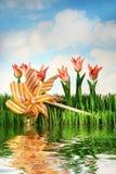Tulips e pinwheel fotos de stock royalty free