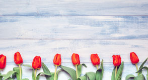 Tulips. Easter - Tulips On Blue Board Stock Image