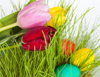 Tulips and Easter eggs. In green grass on a white background Royalty Free Stock Photo
