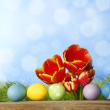 Tulips and easter eggs Stock Images