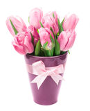 Tulips and eggs isolated Royalty Free Stock Images