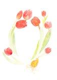 Tulips em um fundo branco Fotos de Stock