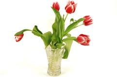 Tulips em um vaso de cristal. Fotos de Stock