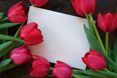 Tulips and envelope. White envelope surrounded by tulips Stock Images