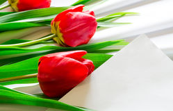 Tulips on fabric Royalty Free Stock Photo