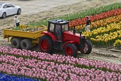 Tulips farmed, Miniature Town, Netherlands Stock Photography