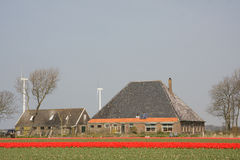 Tulips and a farmhouse Stock Photo