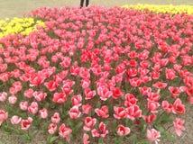 Tulips festival Stock Photography