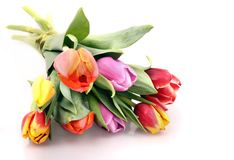 Tulips fie Royalty Free Stock Image