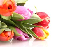 Tulips fie Royalty Free Stock Photography