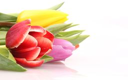 Tulips fie Royalty Free Stock Photos