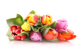Tulips fie Royalty Free Stock Images