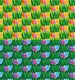 Tulips field seamless patterns. Two version of a seamless tulips pattern Royalty Free Stock Photography