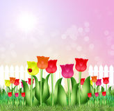 Tulips field in spring. Illustration of tulips field in spring Stock Images