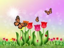 Tulips field in spring. Illustration of tulips field in spring Stock Photo