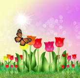 Tulips field in spring. Illustration of tulips field in spring Royalty Free Stock Photos