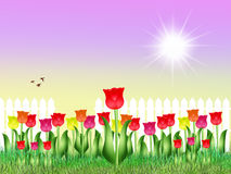 Tulips field in spring. Illustration of tulips field in spring Royalty Free Stock Photography