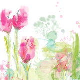 Tulips floral background Royalty Free Stock Photography