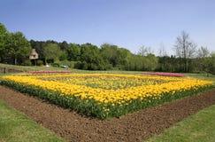 Tulips Flower Bed In Garden Stock Images