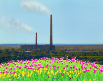 Tulips on the flower-bed and pollution of environment by industry Stock Photo