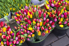 Tulips at the flower market in Amsterdam. Royalty Free Stock Photography