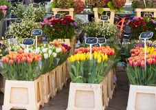 Tulips at the Flower Market stock image