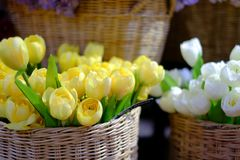 Tulips flower in market Royalty Free Stock Photo